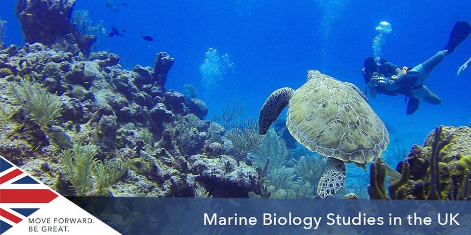 İngiltere'de Deniz Biyolojisi Eğitimi